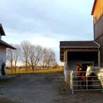 Winterauslauf für unsere Pferde