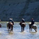 pferde_iller